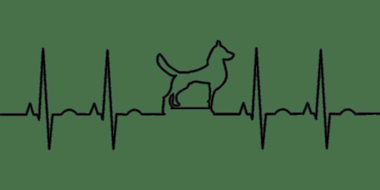 心臓病の犬